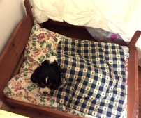callie-gertie-bed-3