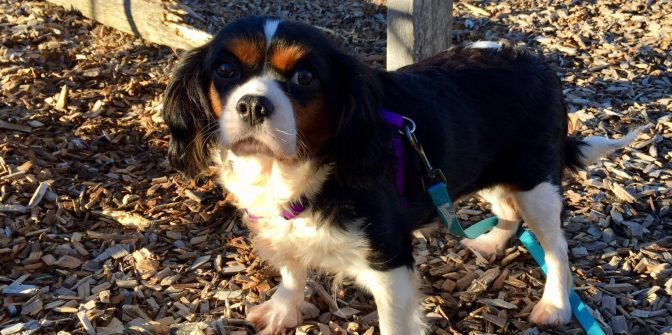 2018 Pet Blogger Challenge – A Look Back and a Glance Forward