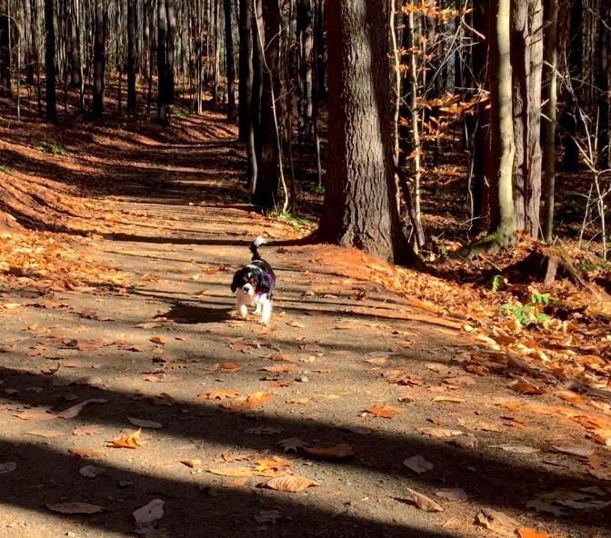 Callie running