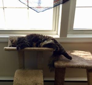 Leeloo Dallas Cat