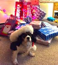 Callie played Santa