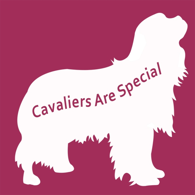 Cavalier hearts: the difference between what breeders say and what they do
