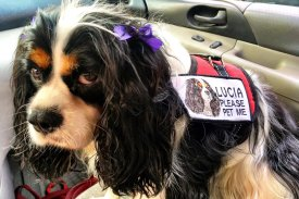 Lucia and therapy dog vest