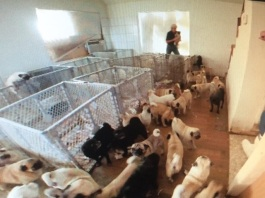 Puppy mill in a house