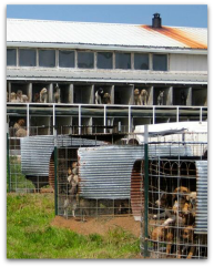 USDA approved puppy mill