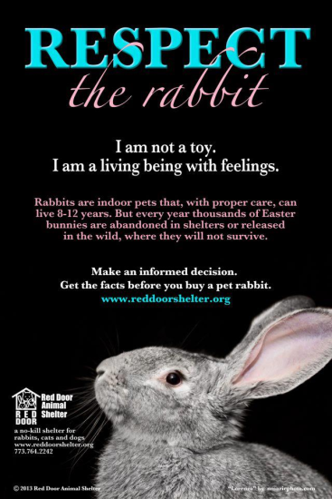 Respect the rabbit