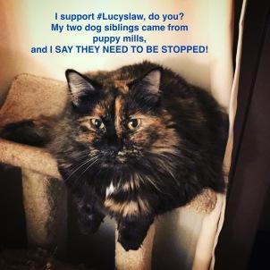 Leeloo LucysLaw