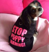 Lucy stop puppy farming t-shirt