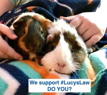 Piggies Lucyslaw